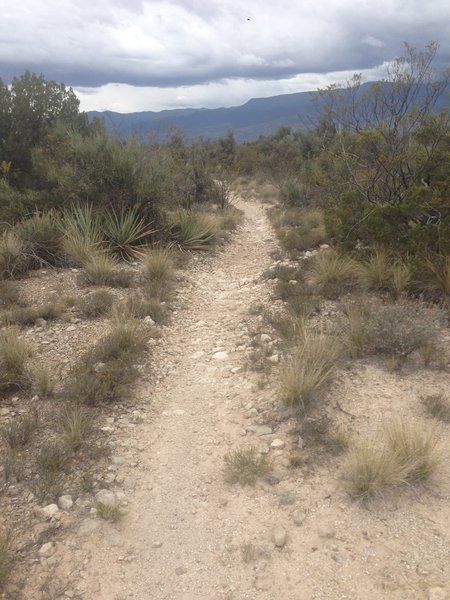 Singletrack on upper Bones Trail.