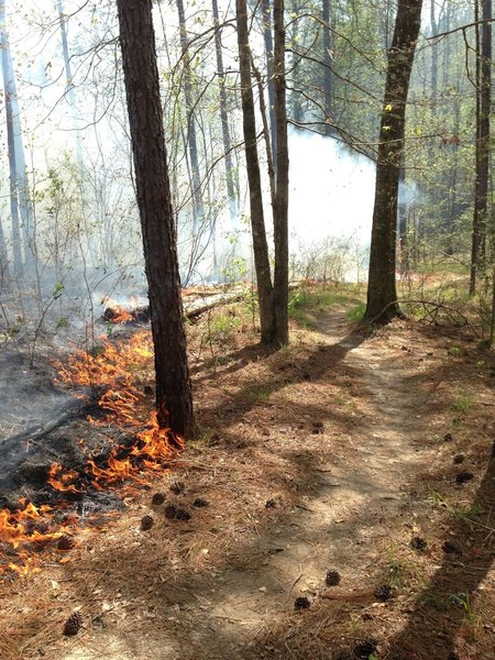 Mississippi Forrestry Commission did a controlled burn on about 3 miles of the trail. Most of the burned area is on the trail section called 357. They did a fantastic job at protecting our wooded features. These controlled burns help protect against more damaging fires.