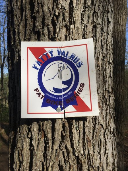 Some signs mark the trail from the Fatty Walrus Fat Bike Race Series.