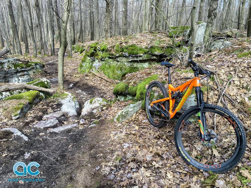Fern Trail.
