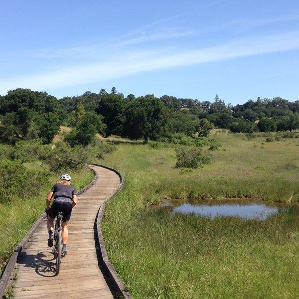Bullfrog Trail.