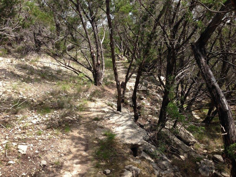 Riding the rim on the Juniper Ridge trail.