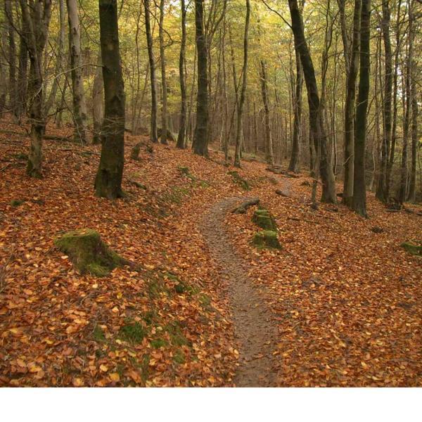 Sinuous autumn singletrack on Minnehaha trail.