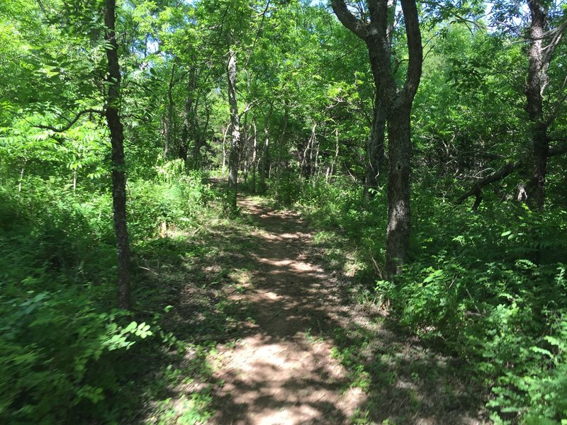 The shaded sections of trail are a welcome relief when the sun is beating down.