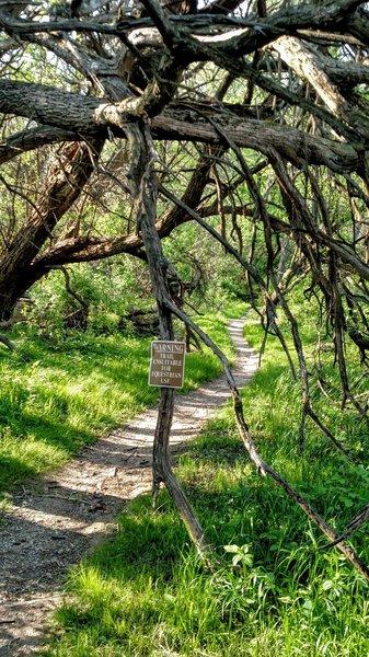 Tree tunnel on the Orange Trail.