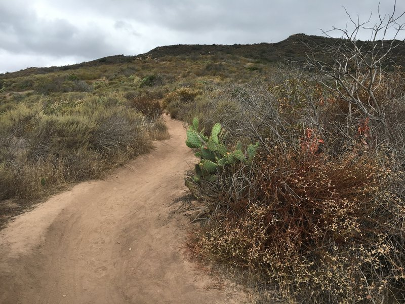 Riding up the many switchbacks on Stagecoach South Trail just south of Nix.