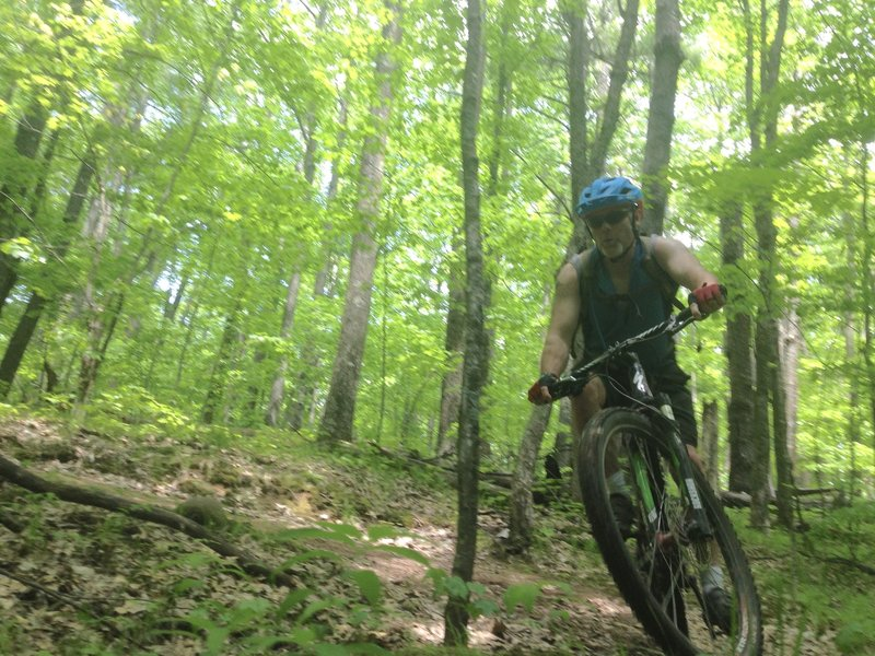 Tight switchbacks galore in the green tunnel of Ojibway trail