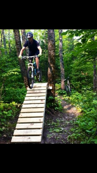 find bridge through a maple clump of trees
