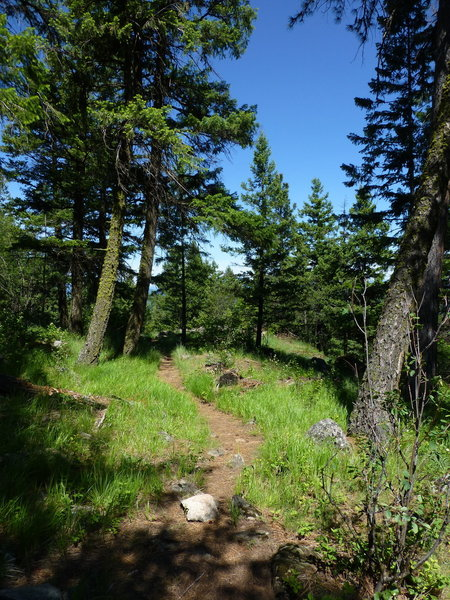 The Highpoint Trail with some dense grass.