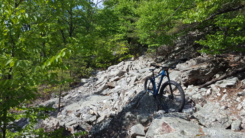Did the loop in reverse today (clockwise). Pic coming down Signal Knob Trail.