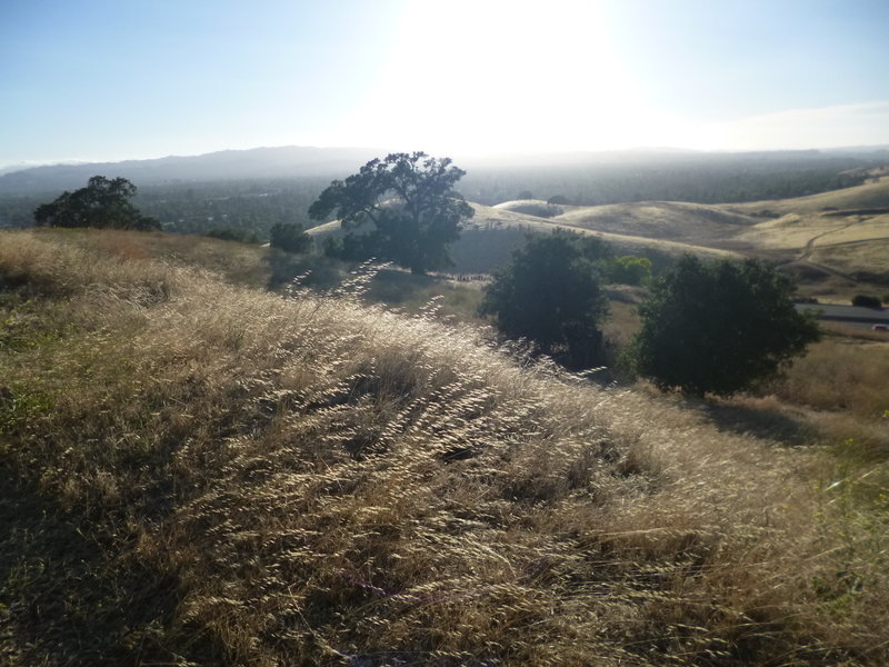 View west from the Ohlone Trail.
