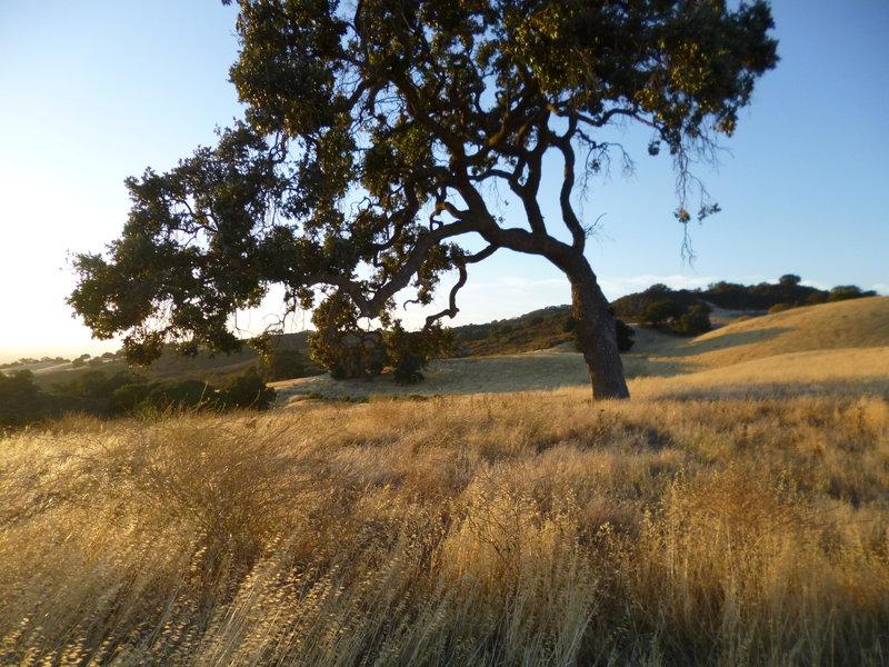 Lime Ridge landscape.