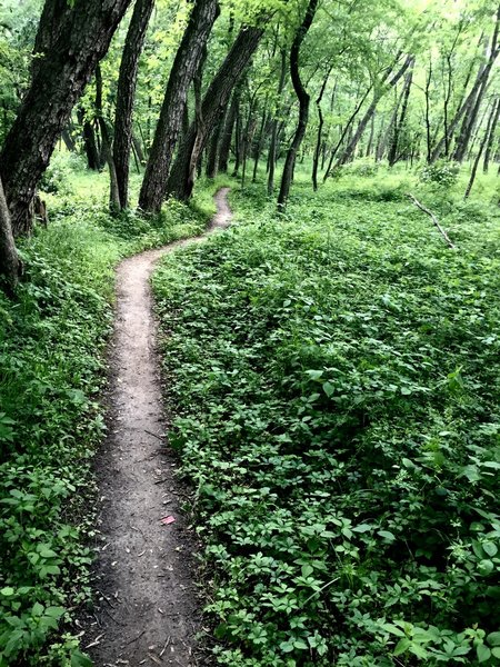 Singletrack on the Clear Creek natural surface trail.