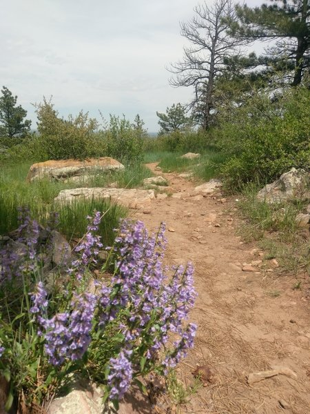 Typical trail surface and wildflower ornamentation