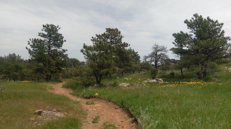 Several flower-filled meadows peek through the trees