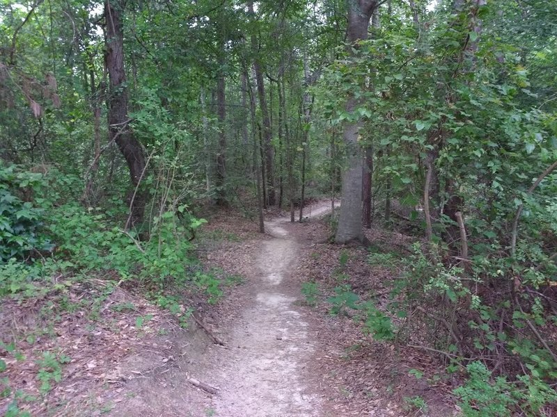 Entering the wooded section just beyond the trail start.
