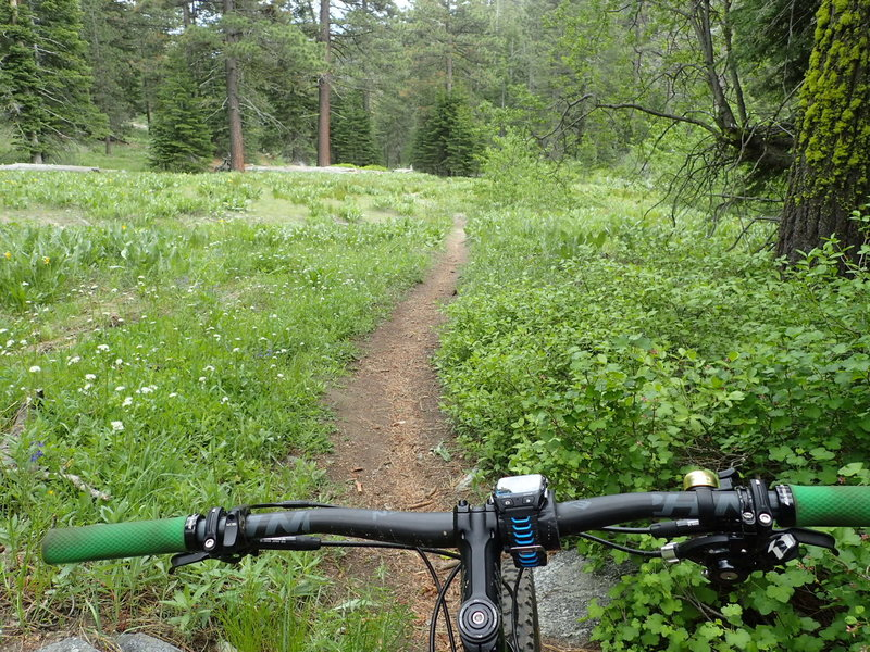 The winding flowery meadows of General Creek Trail.