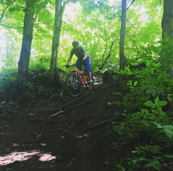 A rooty descent on Osler Side Trail.