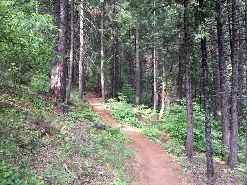 Smooth singletrack greets you at the beginning of the trail (near the Logging Museum).