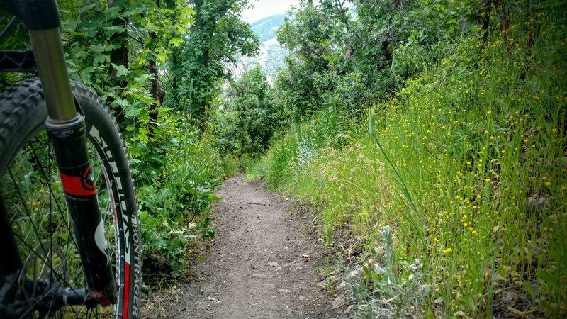 Springtime wildflower line the trail.