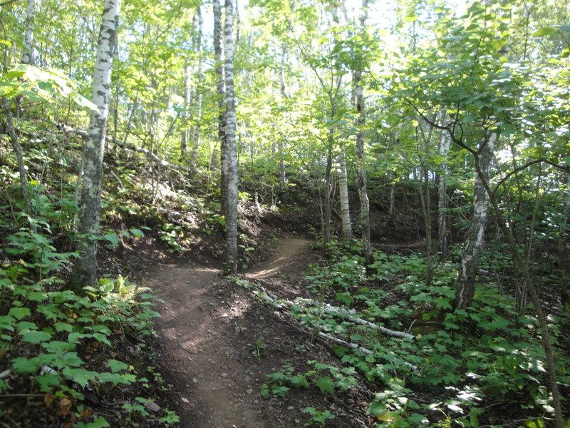 Amity East Trail.