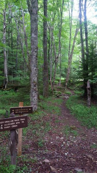 The start of Swallow Rock Trail from Seneca Creek Trail.