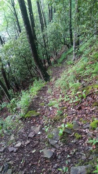 Very end of Swallow Rock Trail is steep, narrow, and off camber.