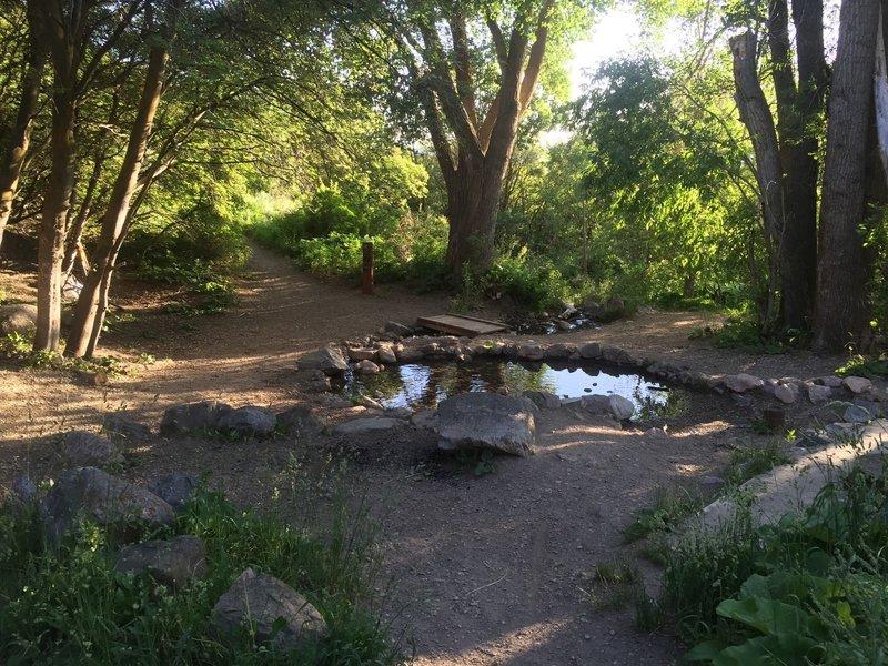 The pond of Pond Trail.