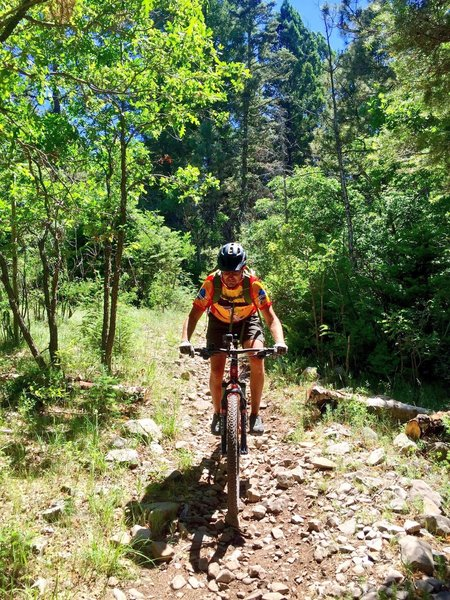 The beginning of a trek near the Slide Campground trailhead.