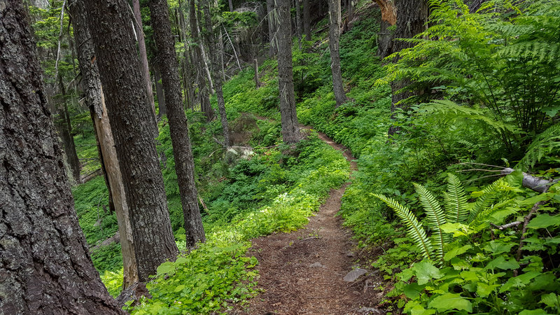 Riding down Bernard Peak Trail (#37) in June, trail conditions are prime!