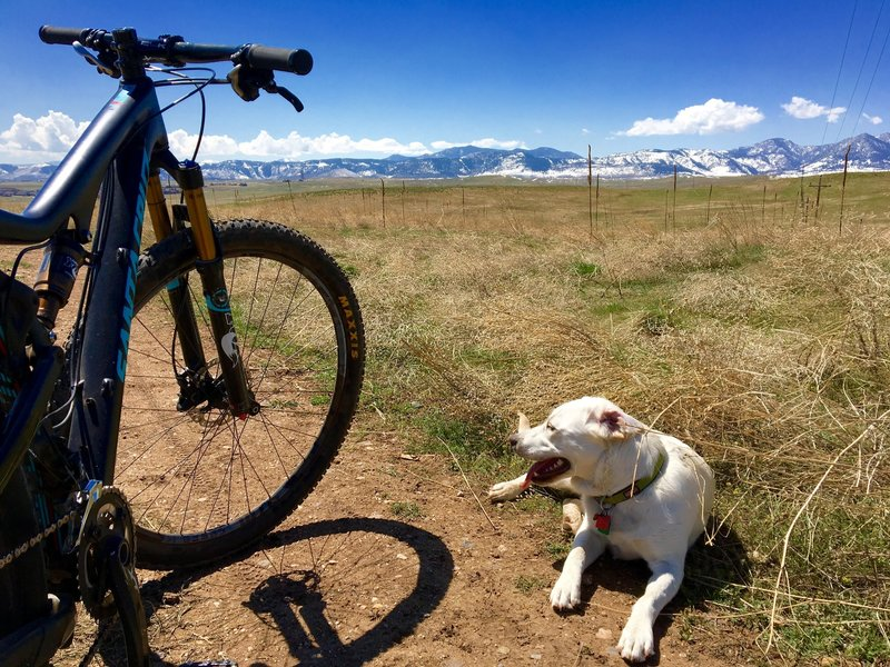 Gorgeous mountain and plains view on the way down to the reservoir. Off leash.