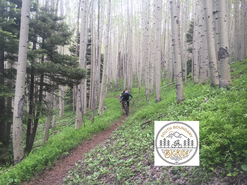 One of the many amazing sections of Aspens and singletrack!