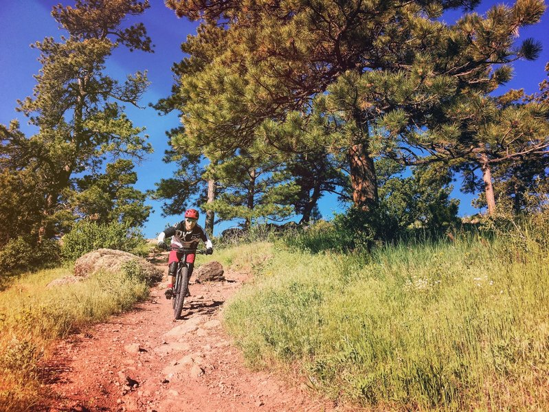 Fun descents are to be had on the upper portion of Long Horn.