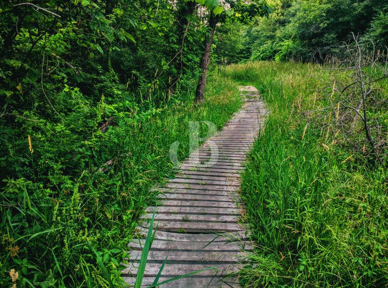 Boardwalk Empire along Trail 1