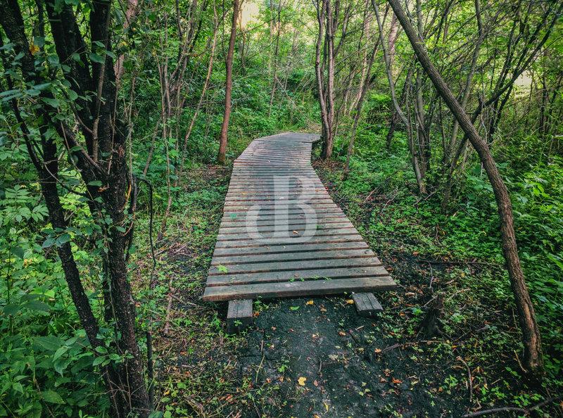 Boardwalk along Trail 3.