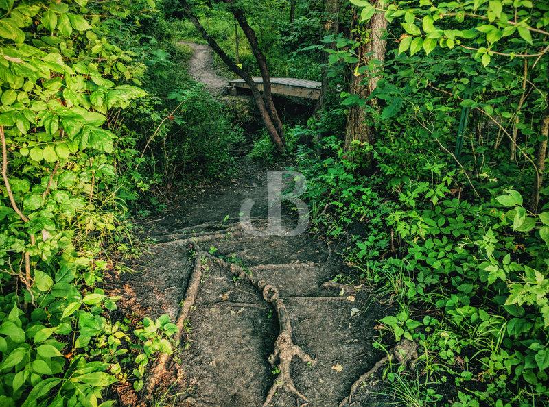 A peek down Soap Box Bridge Root Drop In. Trail C creek crossing in the background