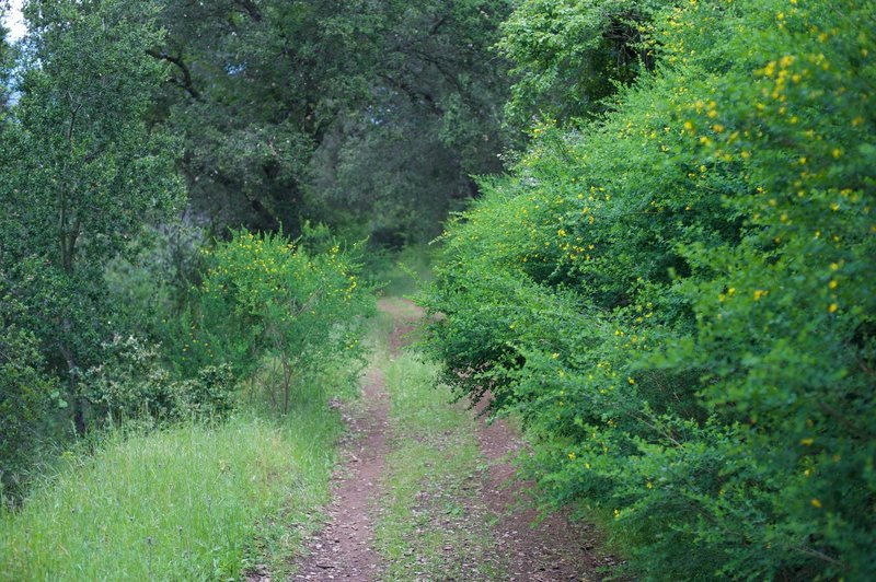 As the trail descends along the backside of the preserve.