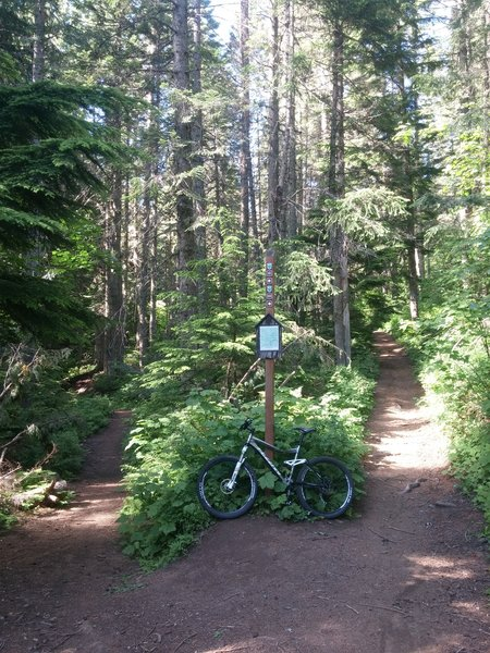 Junction of Trail 100 and 110.