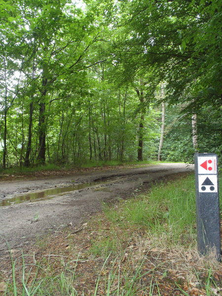 The IMBA signs on the right clearly shows the split coming up (about 30 meters ahead).