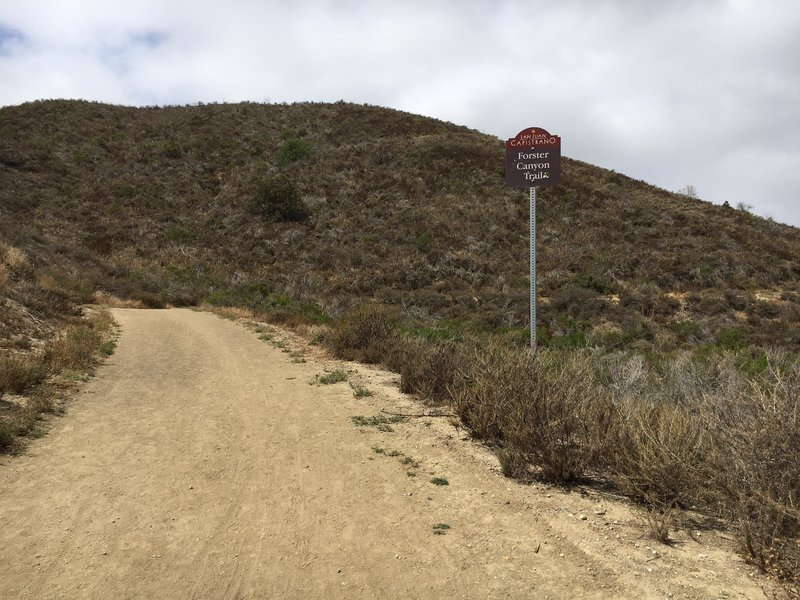 Forster Canyon Trail (aka Flagpole Hill on some maps)