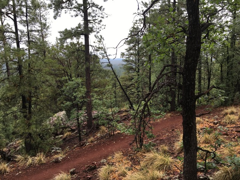 Looking back at the trail, and a bit of a viewpoint, from the Pat Mullen Spur