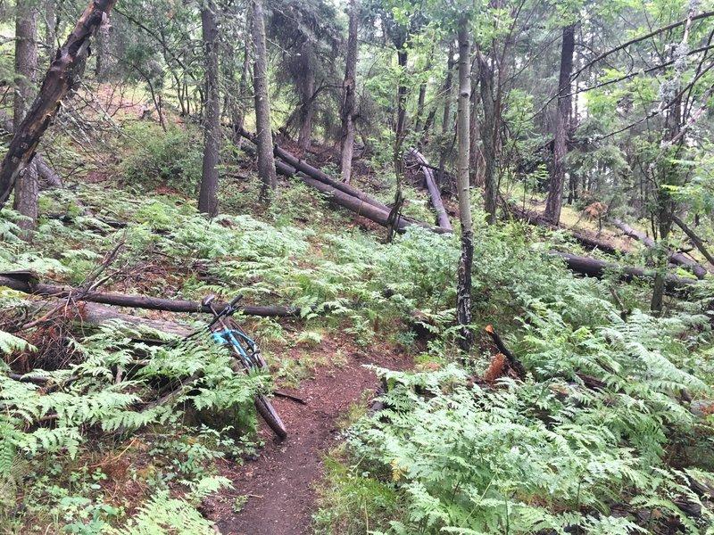 This stretch of trail felt more like Oregon than Arizona