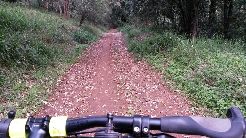 Facing East on the Karura Circuit.