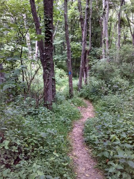 the trail drops off into the woods here, nice and fast for a time.