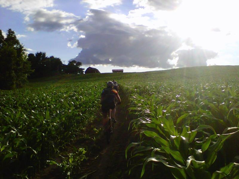 Unique trails through cornfields at times.