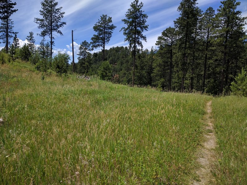 Beautiful views and lightly-used singletrack waiting for you!