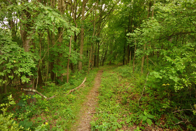 The Orange Trail continues down the hill.However, after this section, it is overgrowth.