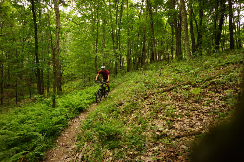 Nice open downhill section of the Orange Trail.