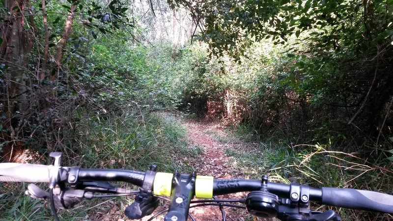 Great singletrack. Lots of low lying branches, use caution.