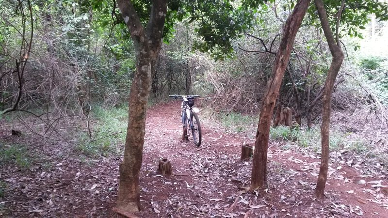 Watch out for tree stumps on this steep singletrack descent.